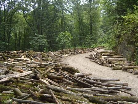 نگذاریم بمیرد جنگل؛ که جهان خواهد مرد/ فیلم