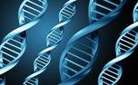 ساخت حسگر زیستی تشخیص عوامل آسیبزای دی ان ای