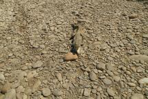 نجات یک تمساح پوزه کوتاه در چابهار از داخل چاه