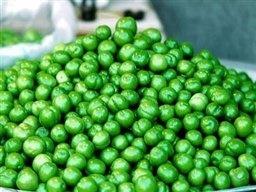 رئیس اتحادیه میوه: گوجه سبز 2500 تومانی را 60 هزار تومان می فروشند!