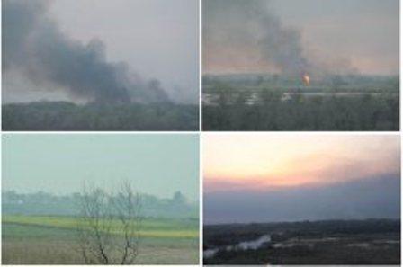آتش سوزی جنگل های حاشیه رودخانه مرزی ارس مهار شد