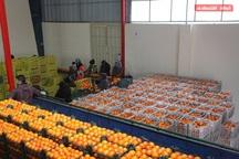 115 تن میوه شب عید در بوکان توزیع می شود