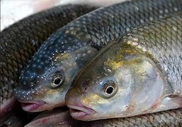 پرورش ماهی، ظرفیتی اشتغالزا و سود آور