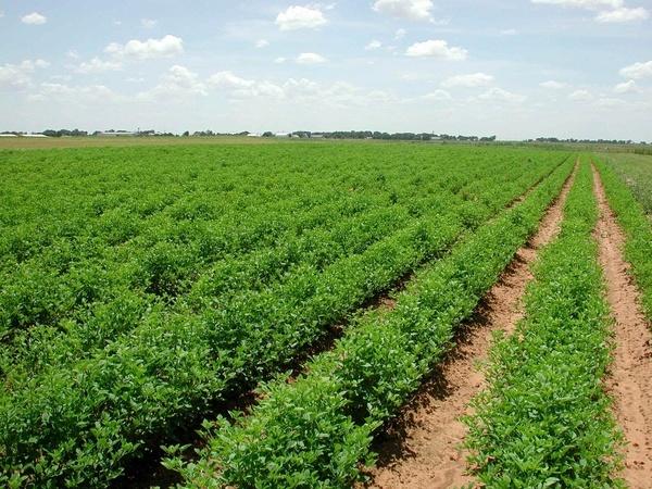 صادرات محورکردن محصولات باغی با انجام آموزش به باغداران کردستانی