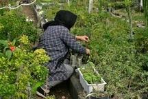 ایجاد چهار هزار فرصت شغلی برای محرومان البرزی