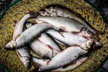 نقش کمرنگ ماهی در سفره های مردم لرستان