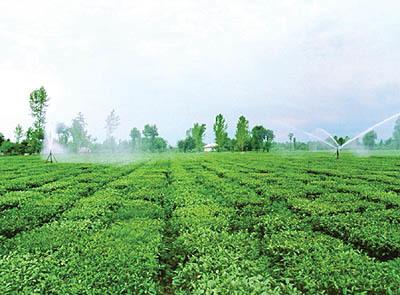 باید به دغدغه های تجاری سازی کشاورزی استان توجه شود