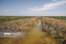 تمدید مهلت ثبتنام دریافت تسهیلات کشاورزی برای سیلزدگان