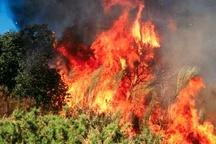 آتش سوزی د ر جنگلهای رودبار