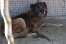 1100 قلاده سگ در قزوین مقابل هاری واکسینه شدند