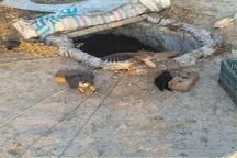 متخلف زنده گیری پرندگان در پارک ملی دریاچه ارومیه دستگیر شد