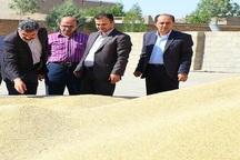 32 هزار تن گندم از کشاورزان بوکانی خریداری شد
