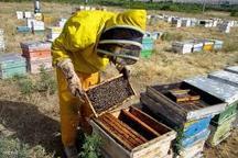 افزایش 50 درصد تعداد کلنیهای تولید عسل در شهرستان نمین