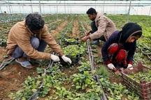 تسهیلات خود اشتغالی روستایی 442 شغل مستقیم در ایذه ایجاد کرد