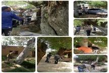 برگزاری همایش بزرگ مردمی مبارزه با آفات درختان شاهجوی بلده
