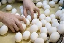تولید داخلی تخم مرغ در زنجان، به واردات آن پایان داد