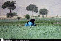 طرح بررسی ساختار قامتی زنان روستایی اجرا می شود