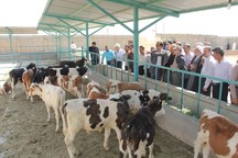 108 طرح عمرانی در همدان  بهره برداری شد