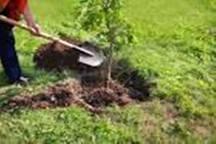 کاشت 1100 درخت به یاد شهدای فسا آغاز شد