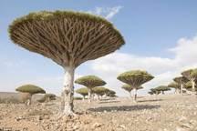 جزیره زیبای یمن، عامل جنگ کشورهای عربی