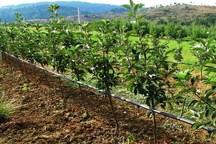 55 هزارهکتار از باغ های مازندران به آبیاری تحت فشارمجهز شد
