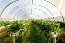 واگذاری تسهیلات به پروژه گلخانه هیدروپونیک کرمان متوقف شد