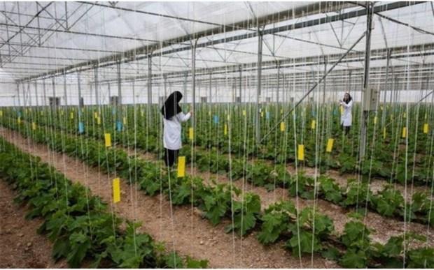 هلندی های در شهرک کشاورزی دیلم سرمایه گذاری می کنند