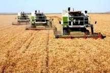 مشکلی برای خرید گندم در استان اردبیل وجود ندارد