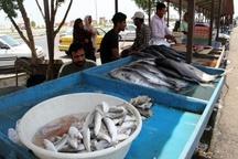 ممنوعیت عرضه و  فروش ماهی توسط دستفروشان در قزوین