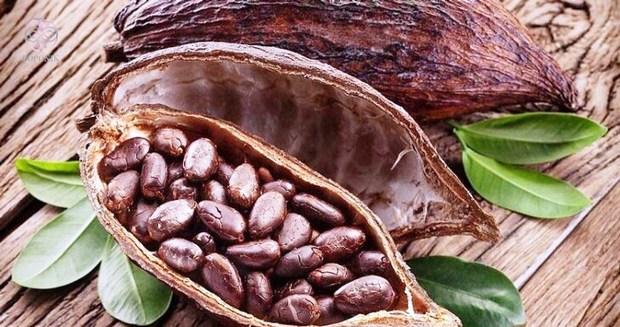 کشاورز رباط کریمی موفق به کشت نهال کاکائو شد