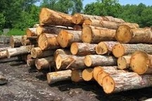 کشف 8 تن چوب جنگلی قاچاق در آمل