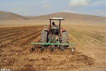 کشت گندم پاییزه در 28 هزار هکتار زمین کشاورزی نقده