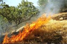 3 هکتار جنگل در مانه و سملقان دچار آتش سوزی شد
