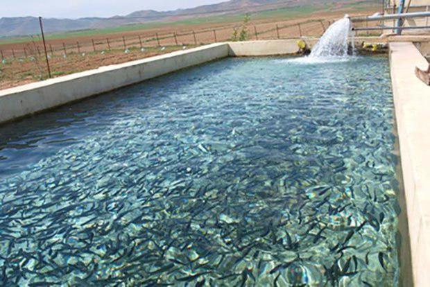 سهمیه تولید ماهی در خراسان شمالی 1600 تن است