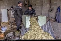12 هزار نفر عضو تعاونیهای روستایی گچساران هستند