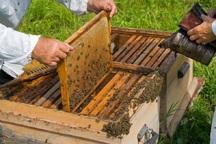 انتقال کندوهای زنبور عسل به اخذ مجوز نیاز دارد