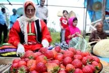 بازدید معاون وزیر تعاون از یک واحد گلخانه در آبیک