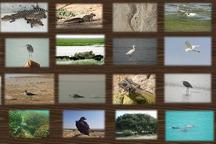 روز جهانی حیات وحش در سیستان و بلوچستان برگزار شد
