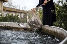سیل 10 میلیارد تومان به مزارع آبزی پروری خسارت وارد کرد