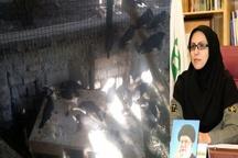 کشف محموله بزرگ پرندگان در سیستان و بلوچستان