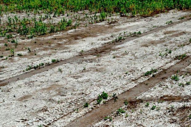تهدید شوری خاک برای کشاورزی پایدار