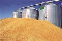 480 تن گندم مازاد بر نیاز کشاورزان چهارمحال و بختیاری خریداری شد