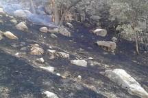 آتش در  ارتفاعات صعب العبور«مارین» گچساران کنترل شده است+عکس
