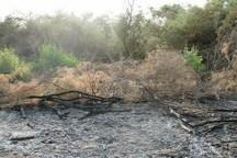 جنگل های بلوط الوار اندیمشک آتش گرفت