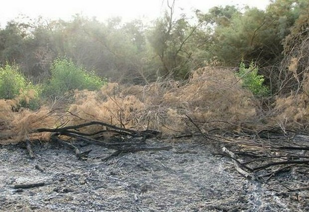 جنگلهای بلوط الوار اندیمشک آتش گرفت