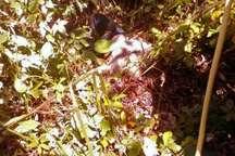 جسد مرد گمشده 46 ساله در پارک جنگلی نور پیدا شد