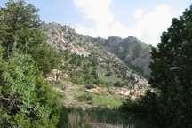 پیش بینی کاشت بیش از 10 هزار اصله نهال گلدانی ارس در خراسان شمالی