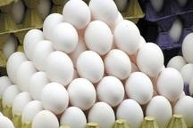 35 تن تخم مرغ در نقده تولید شد