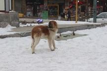 229 نفر در خلخال مورد حمله سگ های ولگرد قرار گرفتند
