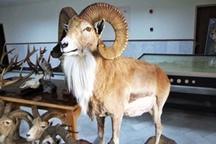 حکم قضایی خلاقانه برای شکارچیان: 40 بار بنویسید « من حیات وحش را دوست دارم»